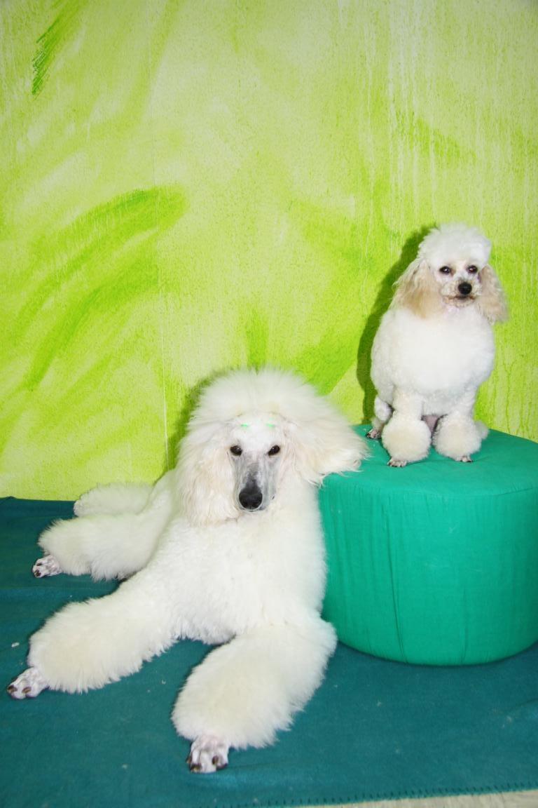 Orely & Fredy