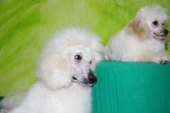 Orely & Fredy (2)